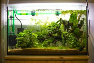 水草が成長しない育たない原因!水草を元気良く成長させる方法とは