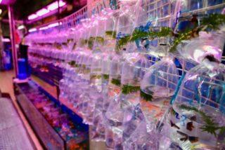 熱帯魚店を開業したい!開業・運営に必要な仕入れなどのポイントを解説
