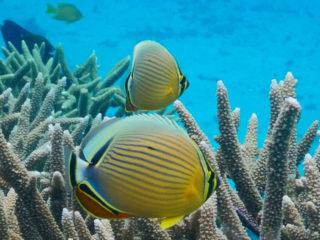 サンゴ用接着剤の種類と選び方を解説!サンゴを固定して管理しよう!