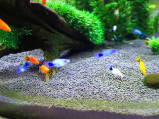 魚に快適な環境とは?泳ぎやすくストレスをつくらないレイアウトを考える