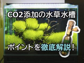 CO2添加水草水槽の仕組みと運用ポイント!機材や設置方法など徹底解説
