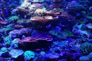サンゴに餌は必要? プロがおすすめするサンゴフードの種類と使い方を解説