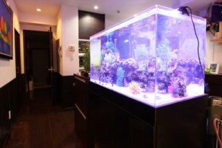 【35事例で一目瞭然!】住宅に熱帯魚水槽を設置したらこうなった!利点とは