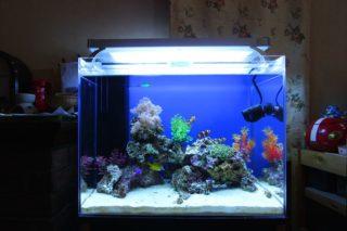 サンゴ水槽の立ち上げ方法!機材の選定、サンゴの導入まで全て解説