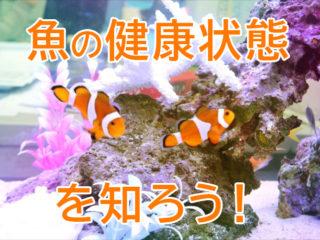 熱帯魚の健康状態を知ろう!体調の変化・サインを見逃さないポイントとは