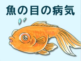 熱帯魚や金魚の目に異変!目に発症する病気の種類と対処法を解説します!