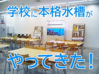 【9事例でよくわかる!】学校に熱帯魚水槽を設置したらこうなった!