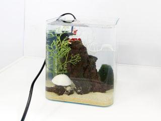 超小型水槽特集!小さくておしゃれな水槽で飼える熱帯魚とレイアウトとは