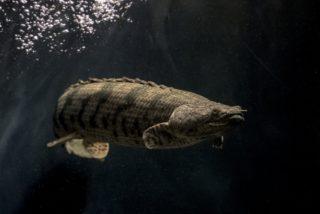 長寿な魚とは!熱帯魚・金魚の強健種ベスト10!長生きのコツも解説!