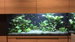 オーバーフロー水槽で淡水魚を飼育するには!注意点と改善策を考える