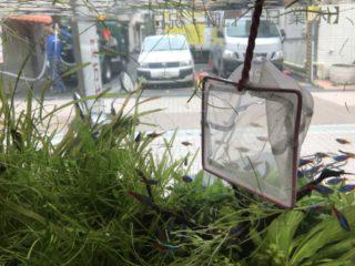水草水槽の掃除方法!きれいなレイアウトを崩さないメンテナンス方法を解説