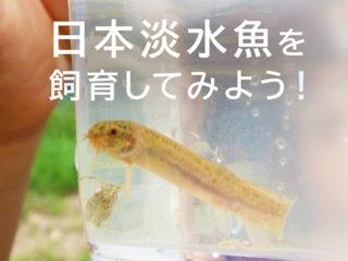 日本淡水魚を飼育しよう!飼育しやすい種類や飼育方法をプロが解説します