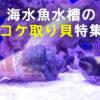 海水魚水槽のコケ取り貝特集!プロも信用するコケ取り貝の種類と特徴とは