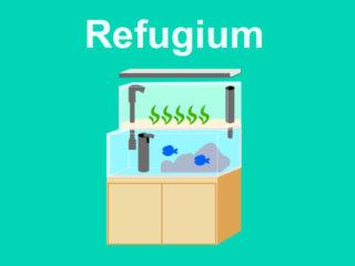 海藻を水槽で育てるリフジウム水槽とは!作り方と最適な水槽・機材の選び方