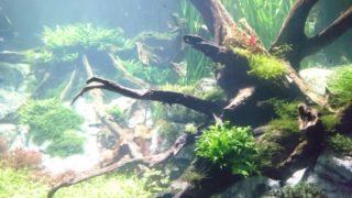 【2019年度版】水草が育つLED照明を水槽サイズごとに全部紹介します!