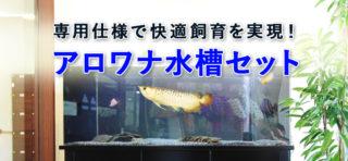 東京アクアガーデンのアロワナ水槽セット!その機能的な仕様に迫る!