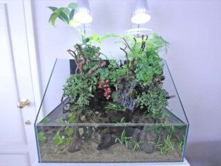 プロが教える!テラリウム水槽の観葉植物をトリミングするときのポイント