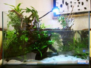 熱帯植物を水槽で育成するには!パルダリウムやテラリウムで緑を楽しもう