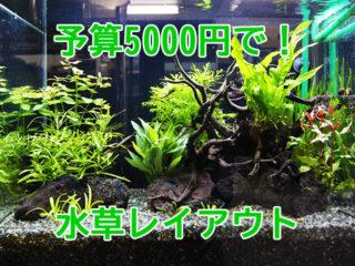 5000円でできる!プロが教える60cm水槽に最適な水草の組み合わせ!