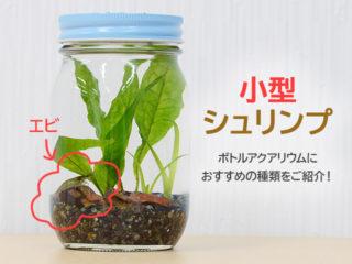ボトルアクアリウムでエビを飼育!おすすめ小型シュリンプと維持のポイント