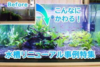 【事例集】熱帯魚水槽ビフォーアフター!やり方次第でこんなに変わる!