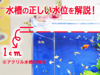 水槽の正しい水位とは! システム別の適正水位と一定に保つ管理方法を教えます