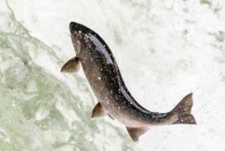 水槽から熱帯魚が飛び出す原因と防止策!飛び出したときの治療法も考える