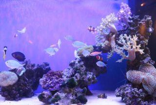 アクアリウムのサンゴが白化する!主な原因5つと対策方法を解説します!