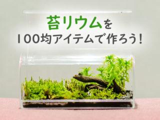 苔リウムを100均アイテムで作ろう!簡単な作り方もご紹介いたします!