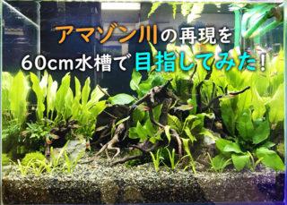 60cm水槽でアマゾン川を再現しよう!おすすめアイテムと熱帯魚と水草