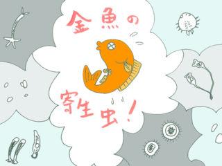 金魚の寄生虫と対処法!種類と対策を解説!季節の変わり目は特に注意!