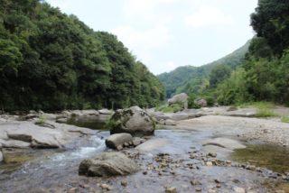 石や流木を川や山から採集して水槽に入れてもいいの?注意点を解説します