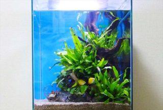 陰性水草を知ってますか?強い光が不要な陰性水草の特徴と種類を解説!!