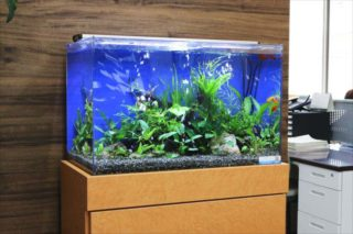 熱帯魚水槽を長持ちさせるコツとは?正しく水槽を使って寿命を延ばそう!
