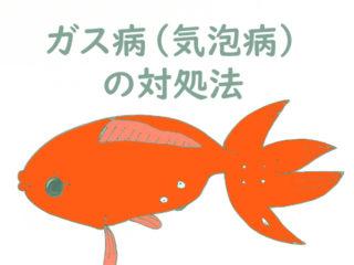 ガス病(気泡病)とは!魚の身体に気泡が付く病気の原因と対処法を解説!