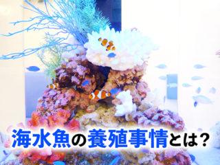 海水魚が高いのは天然個体が原因?! 海水魚の最新養殖事情に迫ります!