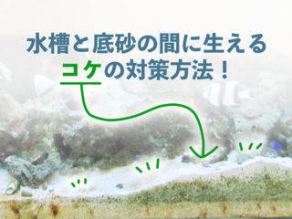 【こんな方法があった!】水槽と砂の隙間に生えるコケの解消方法を解説