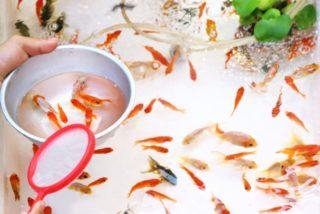 金魚すくいの前に用意したい、便利アイテム7つ!餌や水槽だけじゃない!