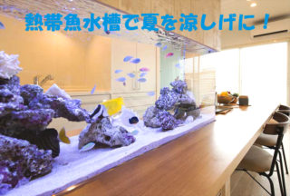 熱帯魚水槽で夏を涼しげに!アクアリウムでお部屋を涼しく演出した事例!