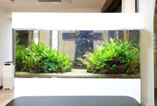 機材なしで水草水槽にCo2を添加する方法!利点とおすすめアイテムを紹介