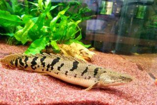 単独飼育がオススメ!ペット感覚で楽しむ熱帯魚や水槽で飼える生き物7選