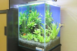 月1回の水換えで熱帯魚水槽を管理する方法とは!?5つのポイントを解説