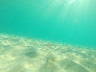 熱帯魚が砂を掘る?砂を掘ってしまう魚種・理由・対策等を解説します