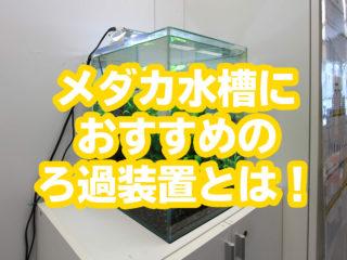 【プロ厳選】メダカ水槽におすすめのろ過装置とは!設置のコツも大公開!