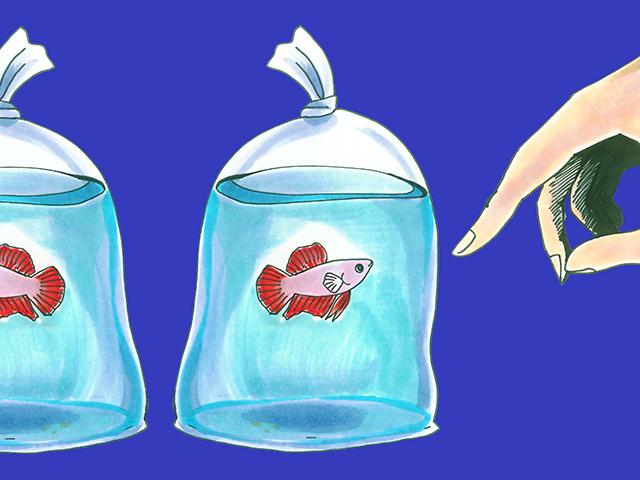 ビニール袋で売られている熱帯魚は大丈夫?パッキングと魚のチェック方法