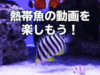 熱帯魚の動画を楽しもう!twitterで人気の動画10選と撮影方法!