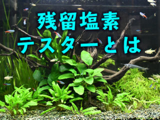 残留塩素テスターとは!熱帯魚などの生体を塩素から守れ!塩素の害も解説