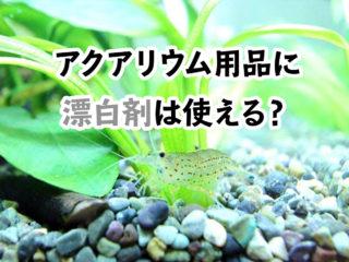 漂白剤を使っても大丈夫?熱帯魚水槽をハイターで綺麗にする方法と注意点