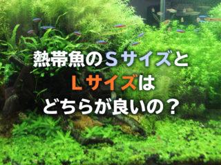 熱帯魚はSサイズとLサイズどちらが良い?サイズ別メリット・デメリット