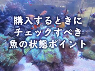 こんな熱帯魚は買ってはいけない!ショップで見るべき魚の状態ポイント14